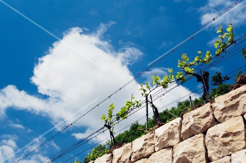 A dry stone wall at the vineyards near Schloss Kasteln, Aargau