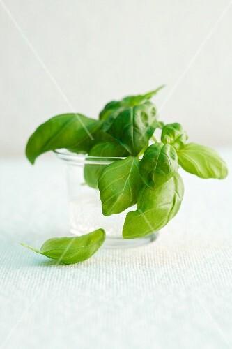 Basil in a glass