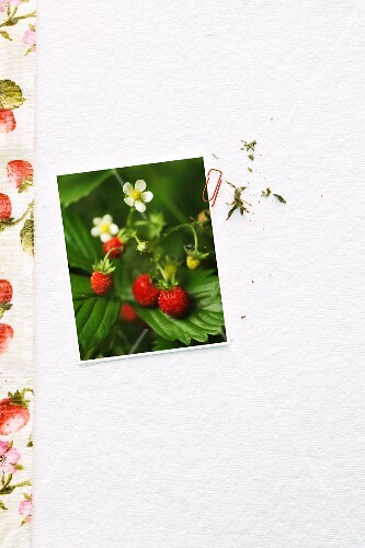 A photo of wild strawberries on a white surface