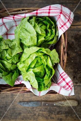 Lettuces on a tea towel in a basket