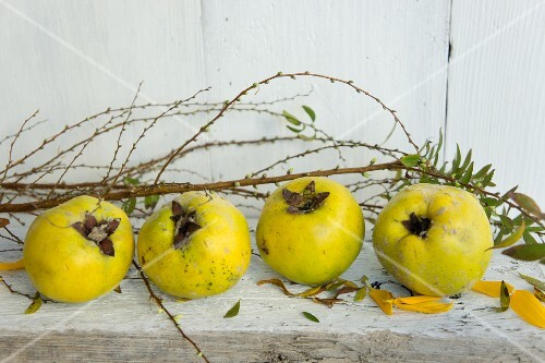 Quinces and sunflower petals