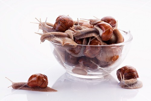 Burgundy snails in a glass bowl and two next to it