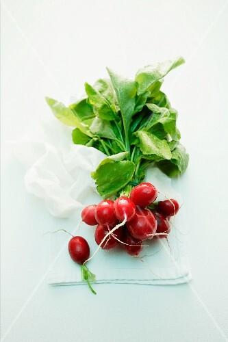 A bunch of fresh radishes on a cloth