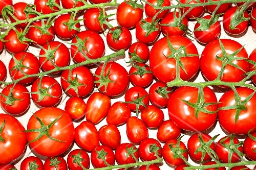 Various vine tomatoes (seen from above)