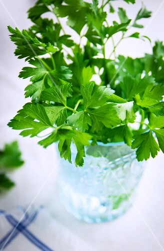 Fresh parsley in a glass of water