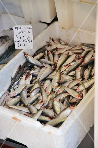 Fresh sprats in a polystyrene container on a market stand