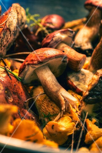 A variety of freshly picked wild mushrooms