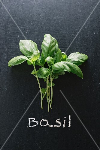 Basil on a chalkboard above the word 'Basil'