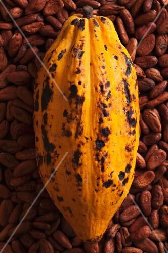 A cocoa pod on cacoa beans