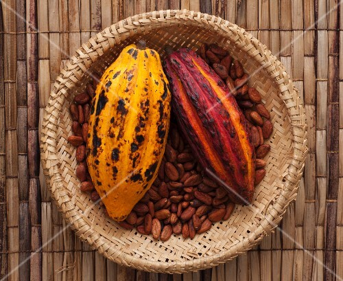 Cocoa pods on beans in a straw basket