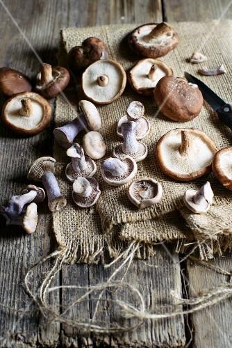 Purple wood blewits and shiitake mushrooms