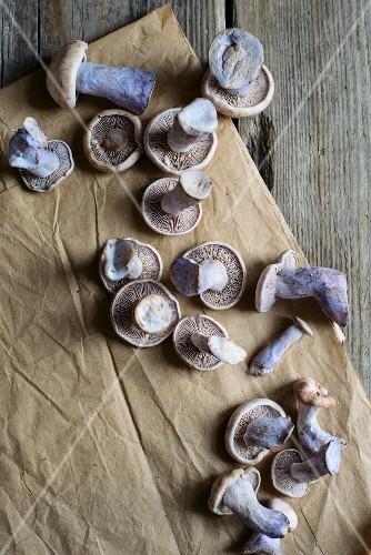 Purple wood blewits