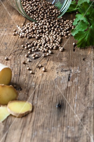 Coriander seeds on a wooden surface with fresh sliced ginger and coriander leaves