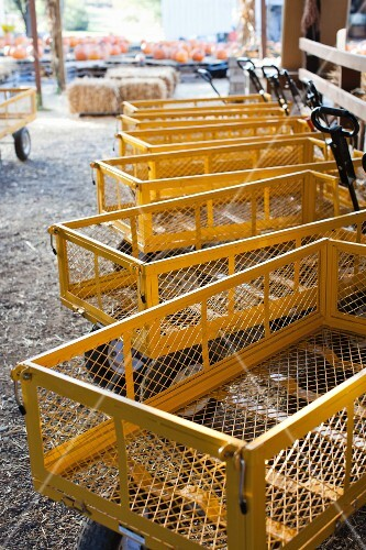 Yellow transportation wagons on a farm