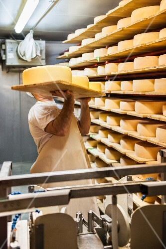 Wheels of cheese being stored on shelves to rippen