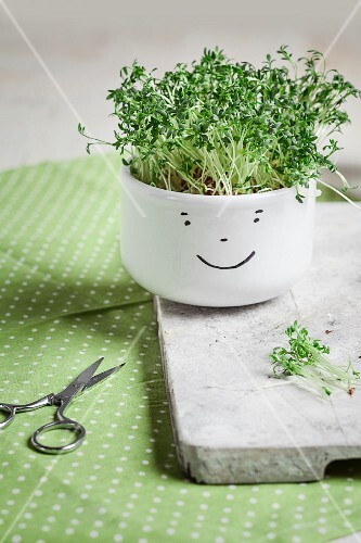 Cress in a white bowl painted with a smiley face on a white wooden board next to a pair of scissors