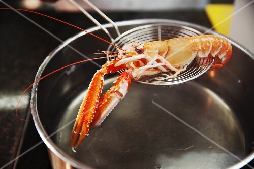 A crayfish being placed into a saucepan