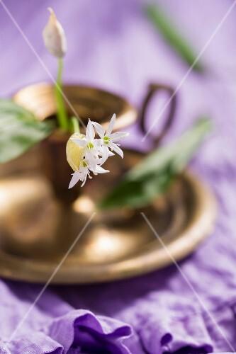 Flowering ramsons (wild garlic)