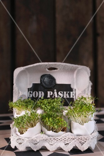 Fresh cress in an egg box as Easter decoration