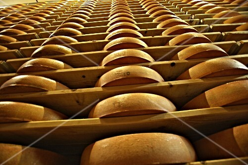 Mountain cheese in a ripening cellar (Lingenau, Vorarlberg, Austria)