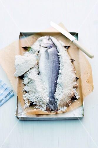 Sea bass with a salt crust