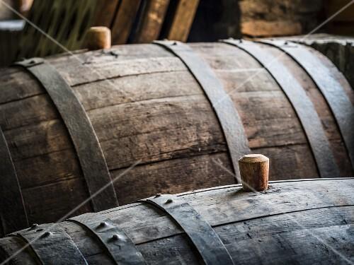 Oak barrels with wooden bungs (cork) in a cellar in the Kakheti wine region, Georgia, Caucasus