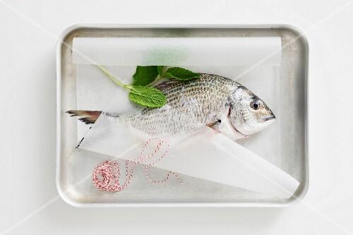 Fresh seabream, mint and kitchen twine