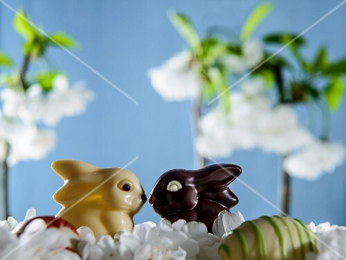 White and dark chocolate bunnies between spring flowers