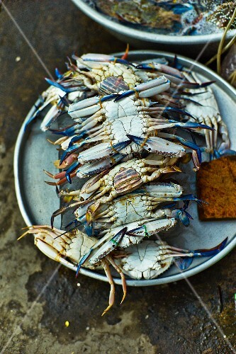 Fresh blue crabs at a market in Saigon (Vietnam)