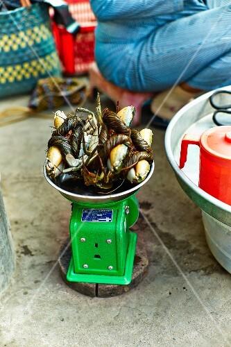 Tied up crabs at a market in Saigon (Vietnam)