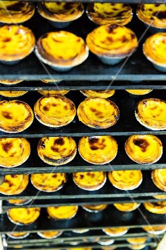 Custard pies on a shelf in a bakery