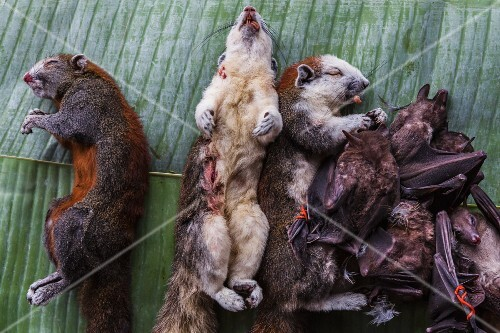 Squirrels and bats at a market, Laos
