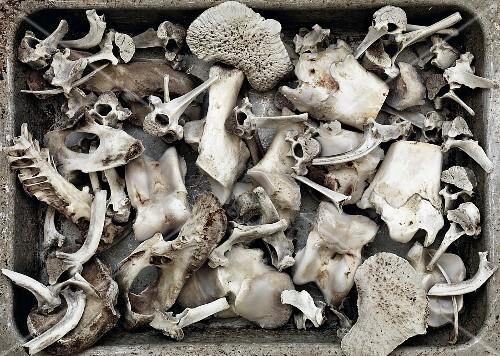 Various bones