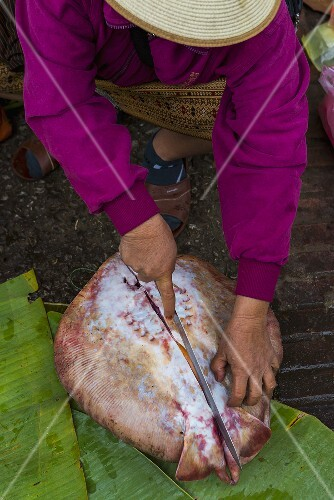 A ray fish being prepared (caught in the Mekong River near Luang Prabang, Laos)