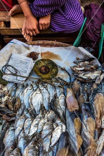 Fresh fish at a market in Myanmar
