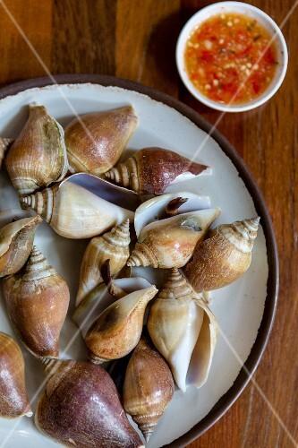 Steamed sea snails with a dip (Krabi, Thailand)