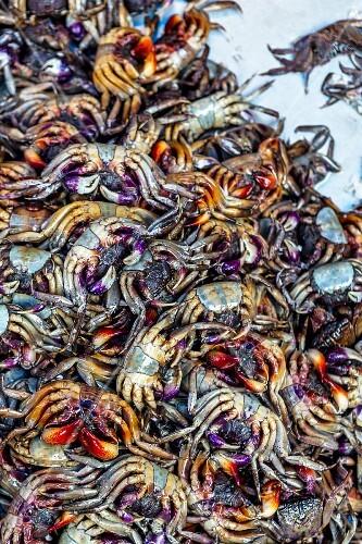 Rice field crabs (esanthelphusa dugasti) at a market (Thailand)