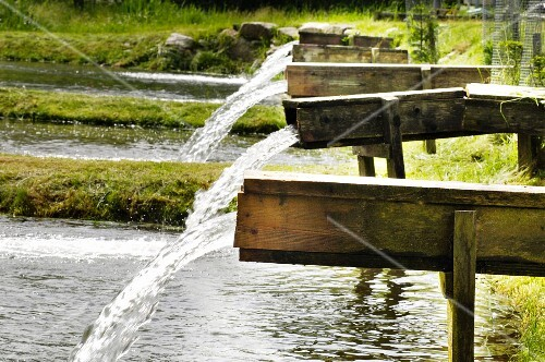 Water flowing into a pond system for breeding Carinthian brown trout (Austria)