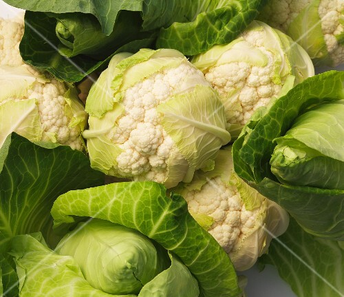 Cauliflower and pointed cabbage (seen from above)