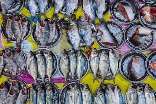 Fresh fish at a market in Myanmar