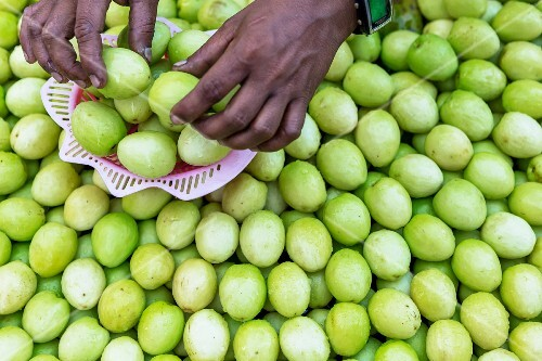 Hands sorting jujube fruits at a market in Myanmar