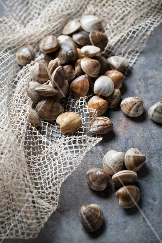 Fresh clams