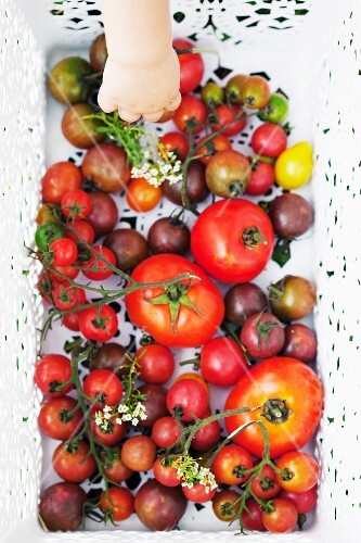 Various types of tomatoes in a basket