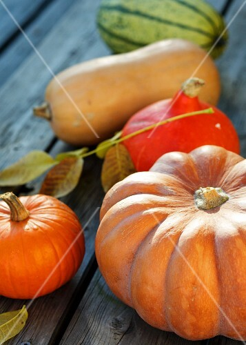 Pumpkins on White