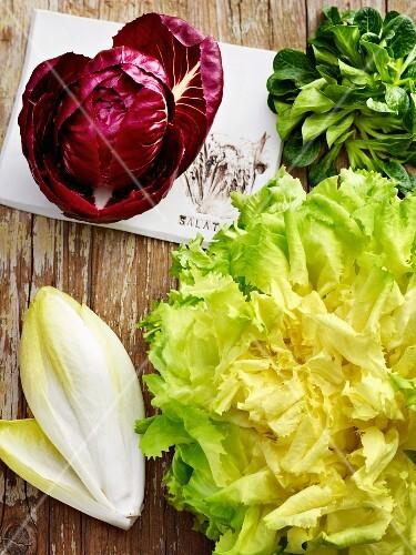 Winter lettuces: radicchio, lamb's lettuce, endive and chicory