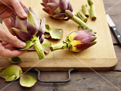 Artichokes being prepared: outer leaves being removed