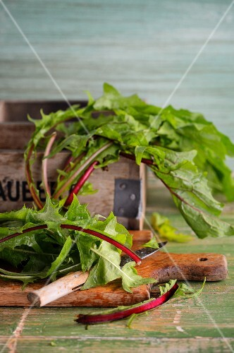 Fresh dandelions with a knife on a wooden chopping board