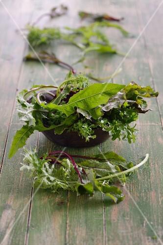Various fresh lettuce leaves