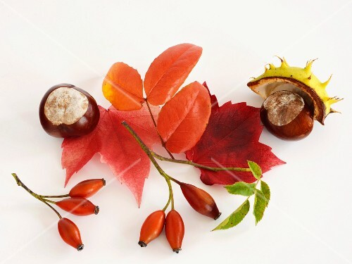 An autumnal arrangement featuring horse chestnuts, rosehips and leaves