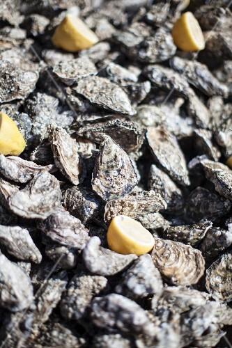 Fresh oysters and lemon halves